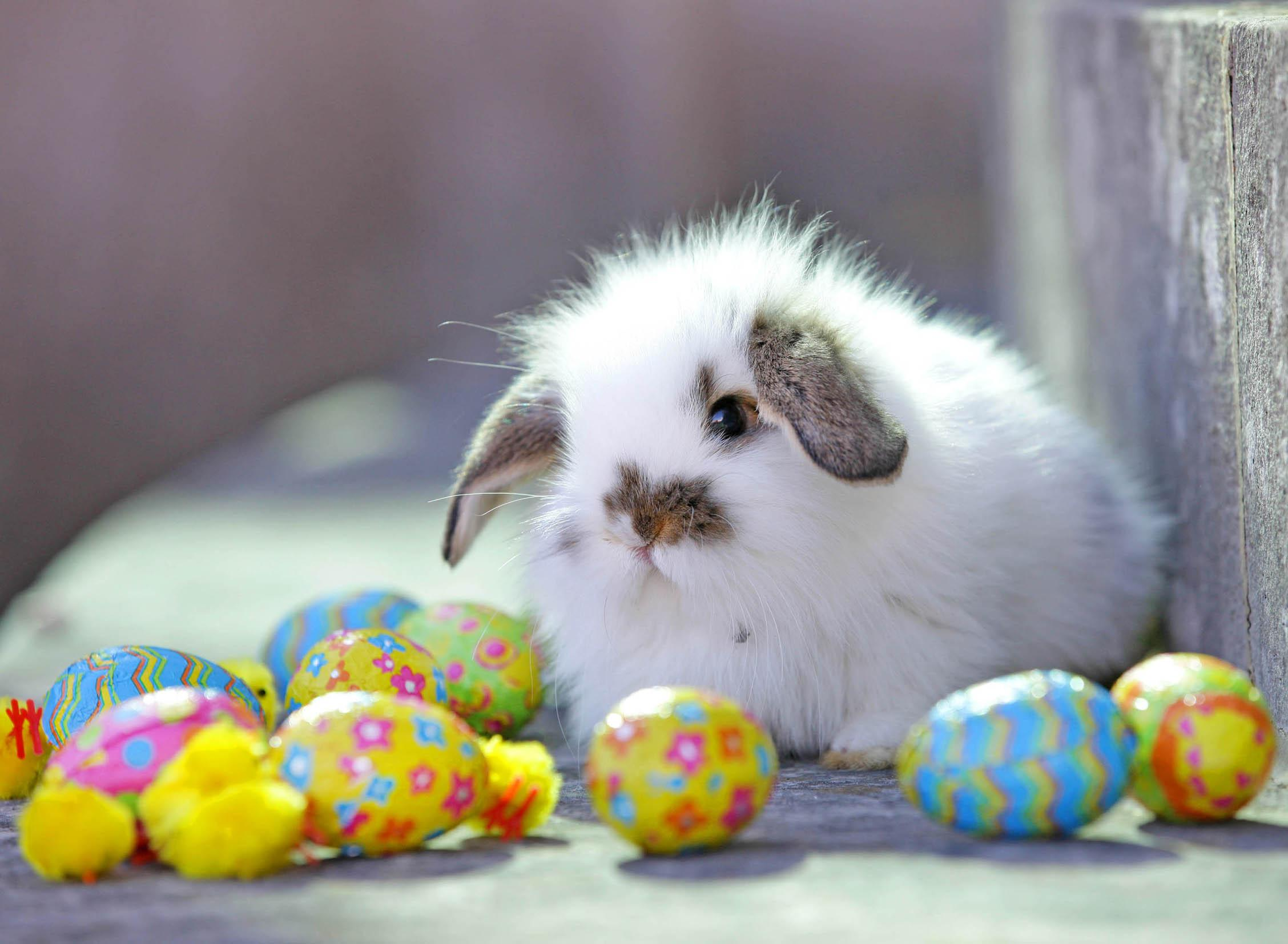 ADORABLE EASTER WALLPAPER   133696   HD Wallpapers 2256x1654