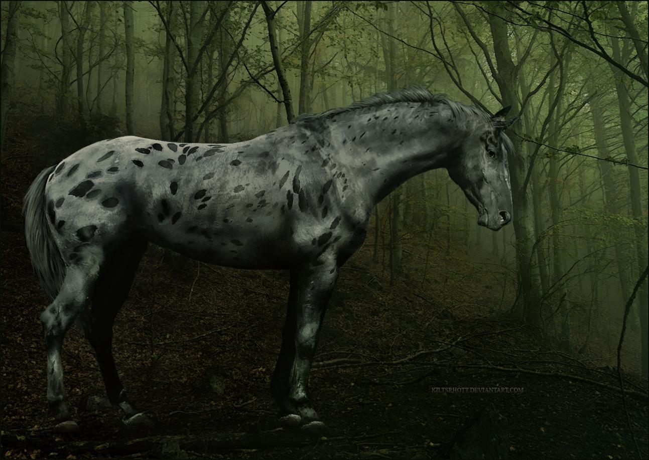 Indian war horse wallpaper   ForWallpapercom 1293x917