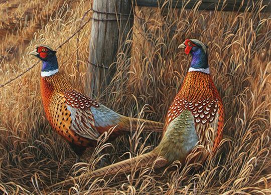 Pheasant Wallpaper - WallpaperSafari