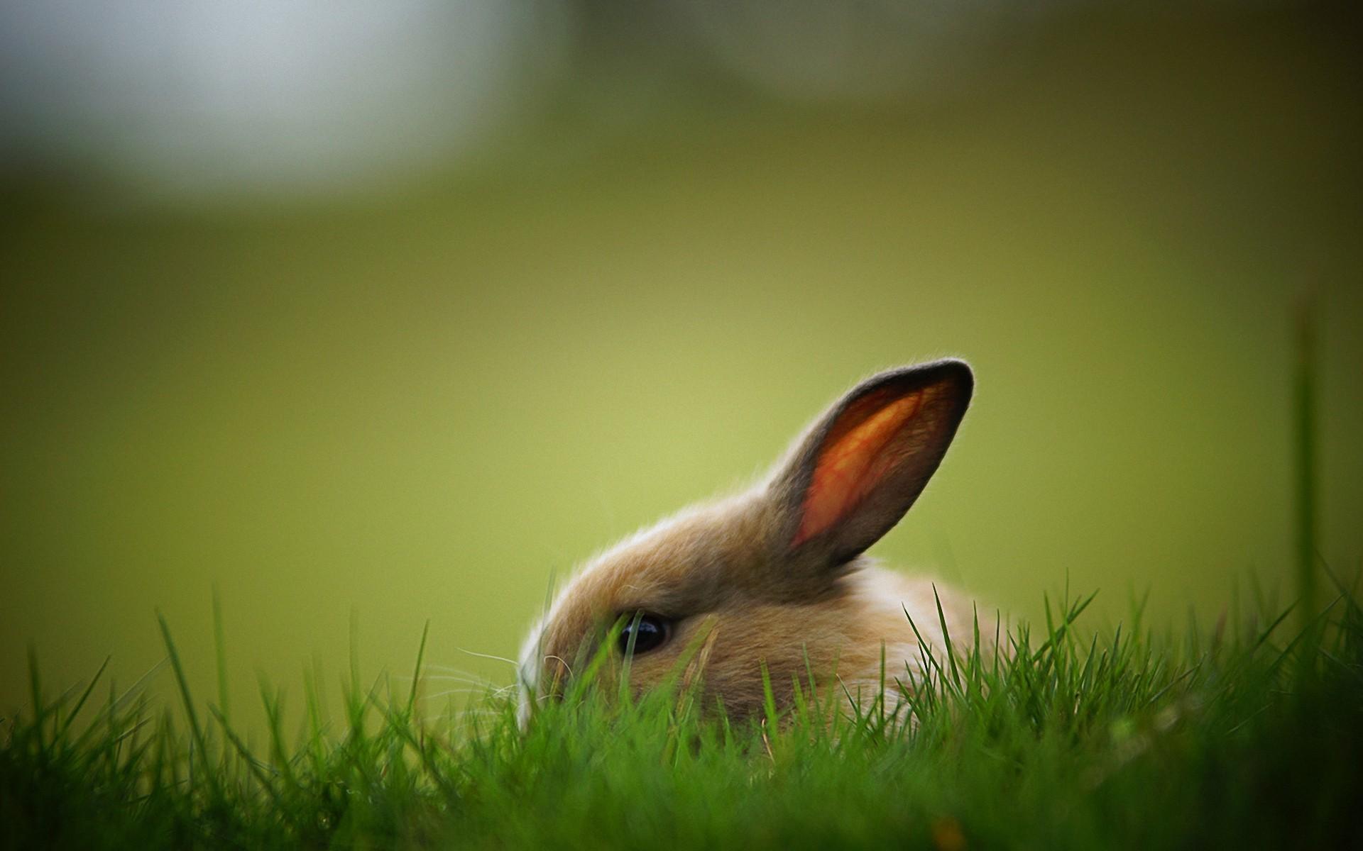 кролик трава  № 1963993  скачать