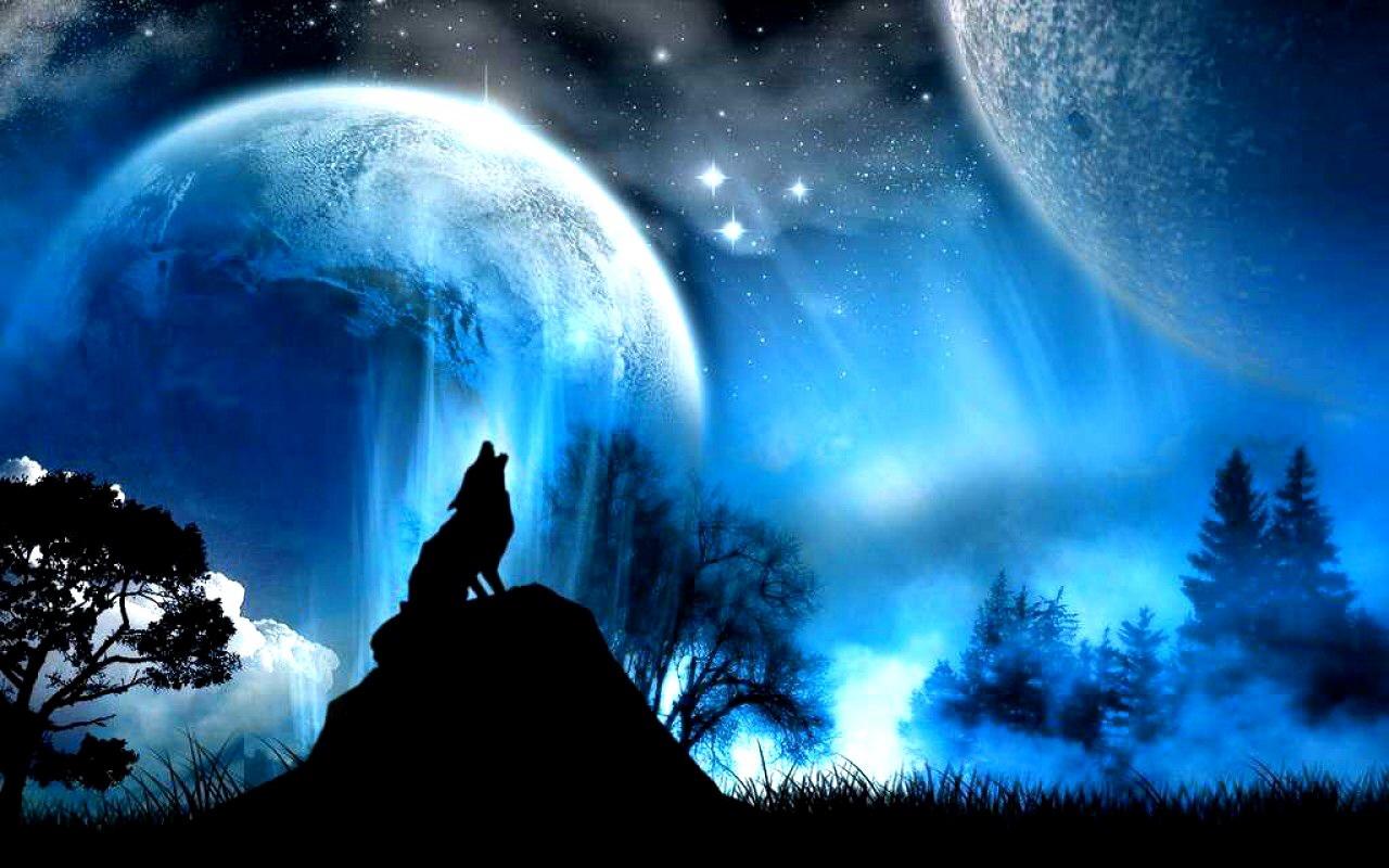 Blue Aura Wolf Computer Wallpapers Desktop Backgrounds 1280x800 1280x800