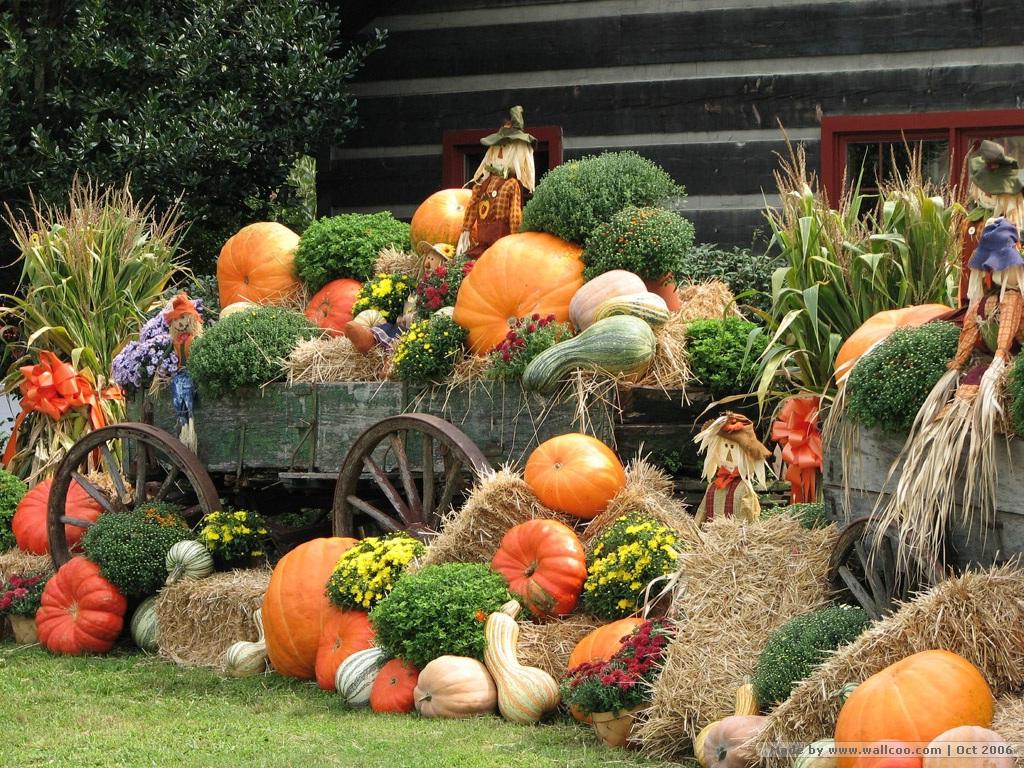 Scarecrow Pumpkins Wallpapers pumpkins scarecrows Pumpkin 1024x768