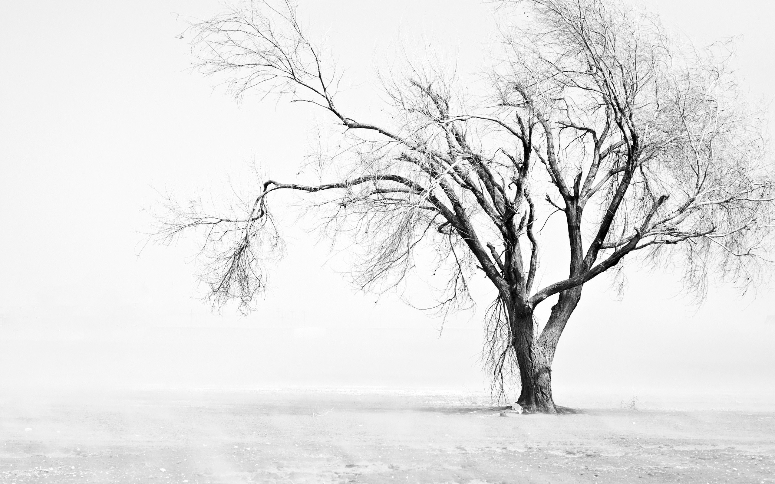 Free Download Tree Wallpaper Black And White 2560x1600 For Your