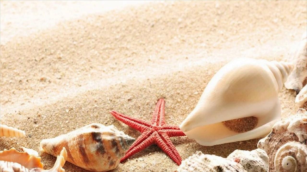 Starfish On Beach Wallpaper Goa India 1280x720