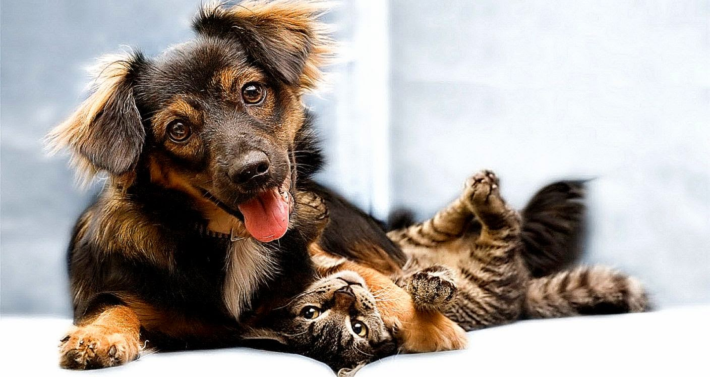 Funny Cats And Dogs Wallpaper Hd Description 6540 Puppy 1408x747