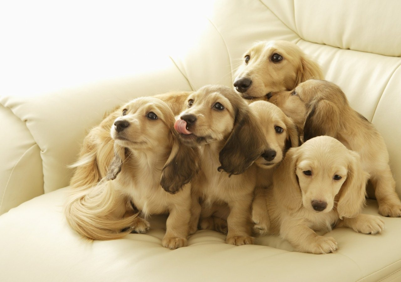 Cute Dogs HD Wallpapers Set 1 1280x900