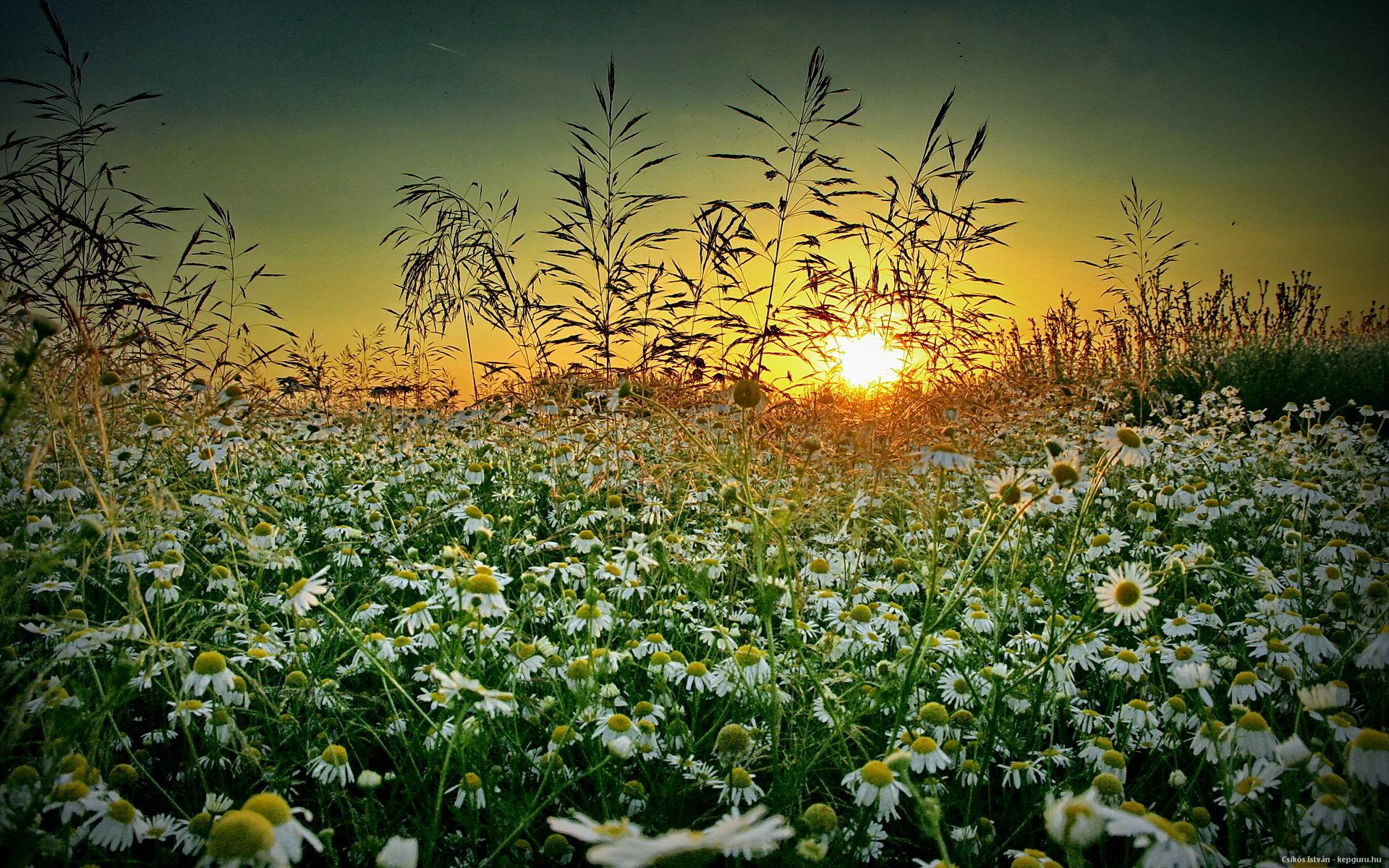 Summer Flower Field Wallpaper Summer Wildflowers Wal...