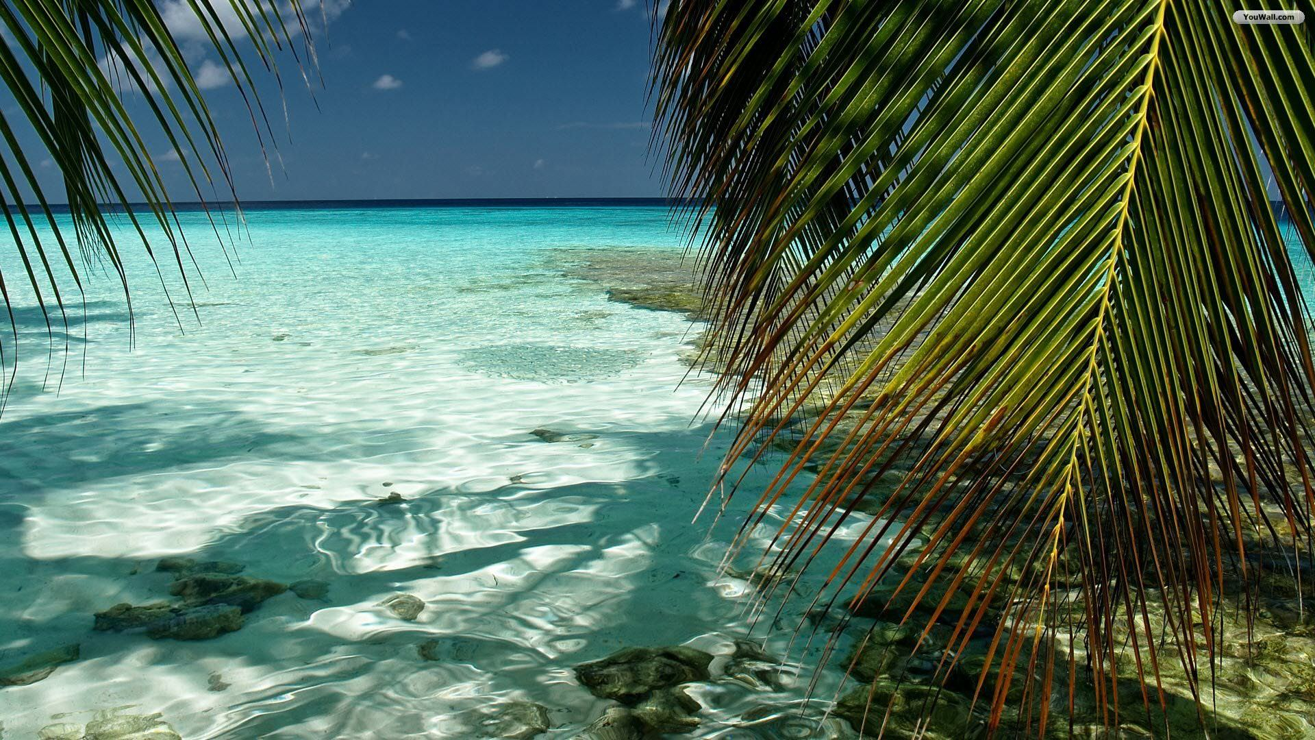 28 Tropical Beach Backgrounds Wallpapers Images 1920x1080