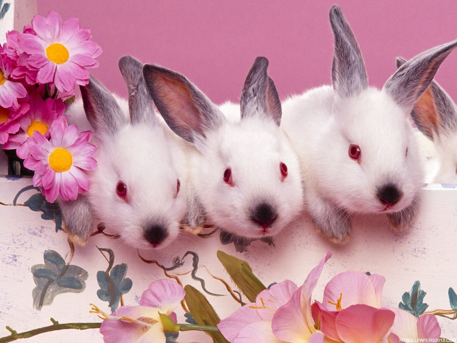 Easter Bunny Wallpaper High Definition Wallpapers High 1600x1200