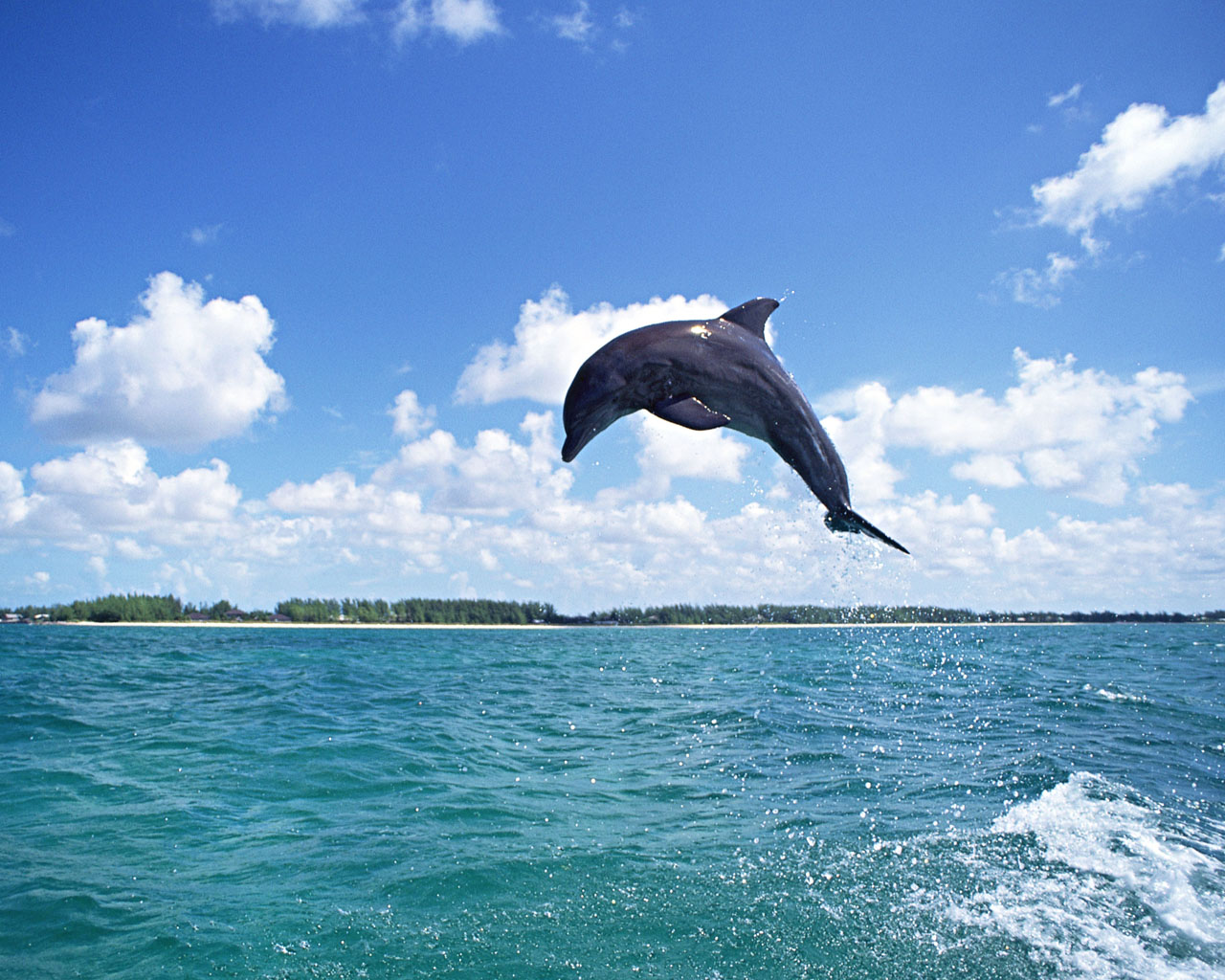 Download High quality Dolphins Wallpaper Num 10 1280 x 1024 1280x1024