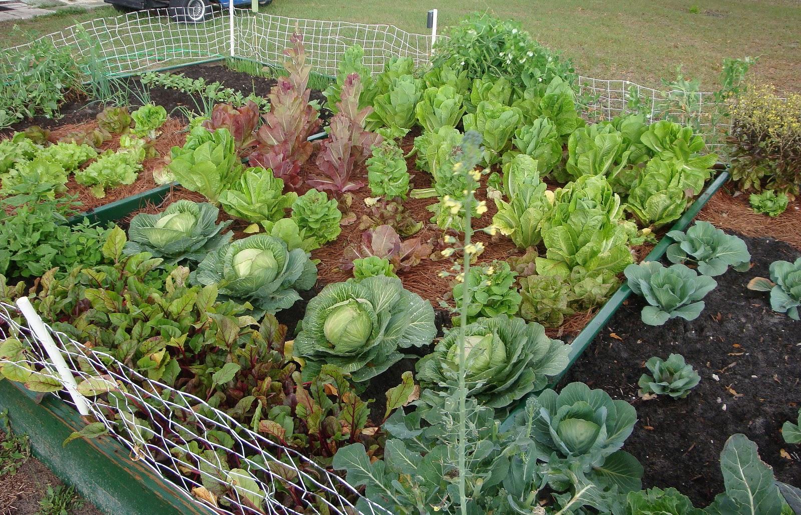 Если во сне вы садите огород — значит, вас ждет благополучие, все задуманное осуществится.