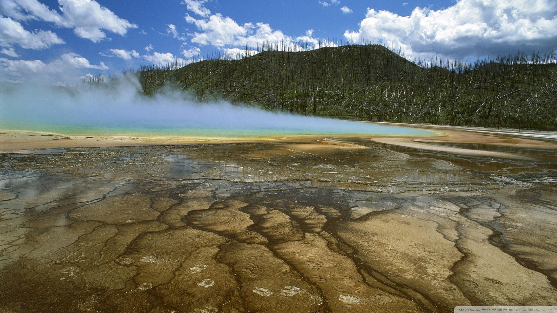 American Bison Yellowstone National Park Montana Wallpaper 1920x1080 1920x1080