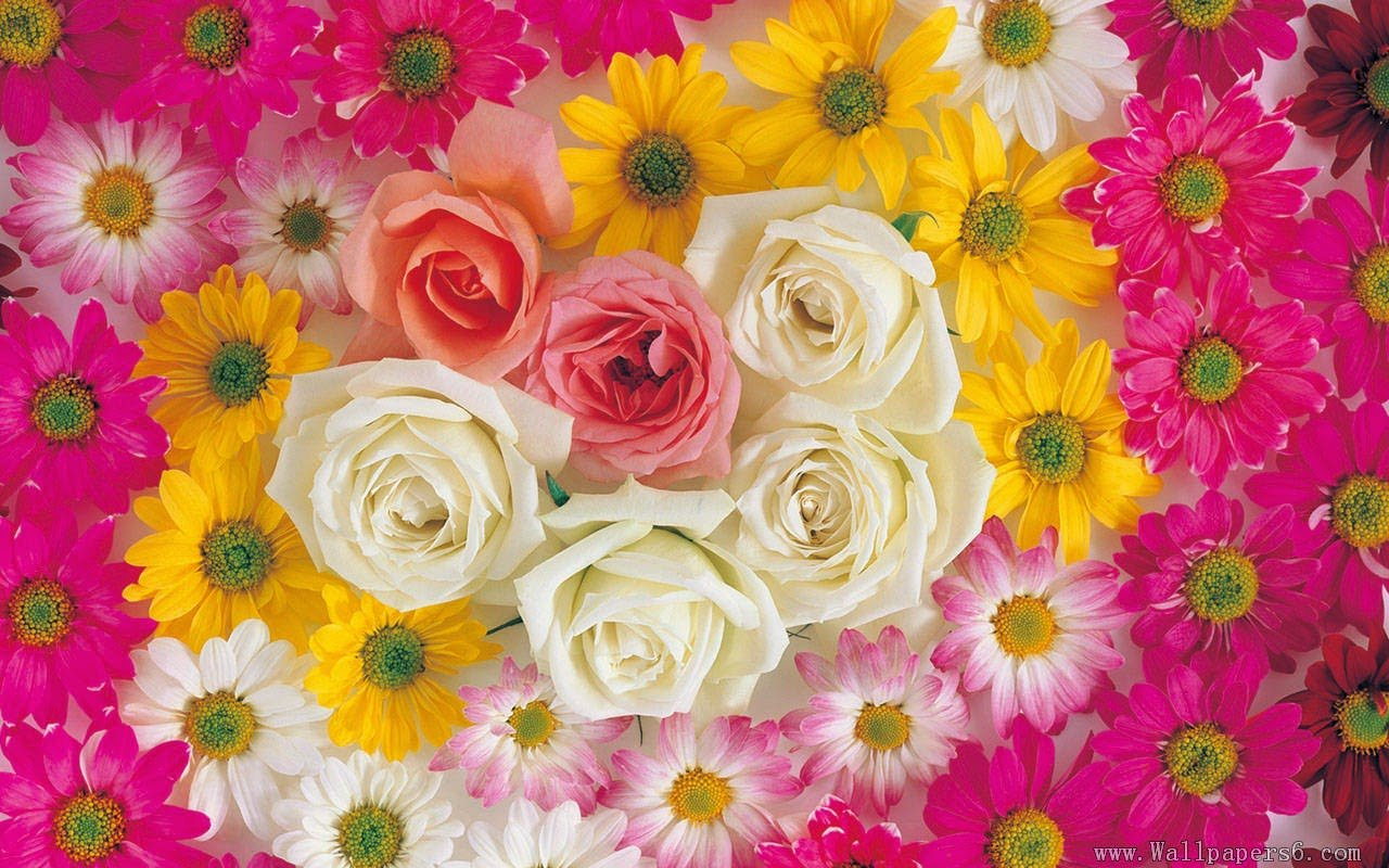 Flowers Wallpapers 1280x800