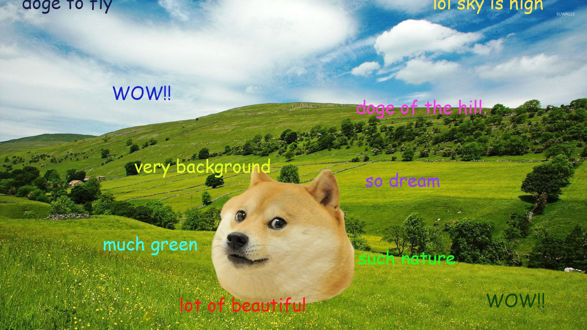 Doge [7] wallpaper   Meme wallpapers   27300 1920x1080