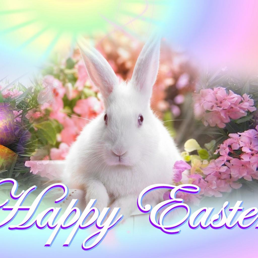 Pics Photos   Newest Happy Easter Bunny Hd Wallpaper 1024x1024