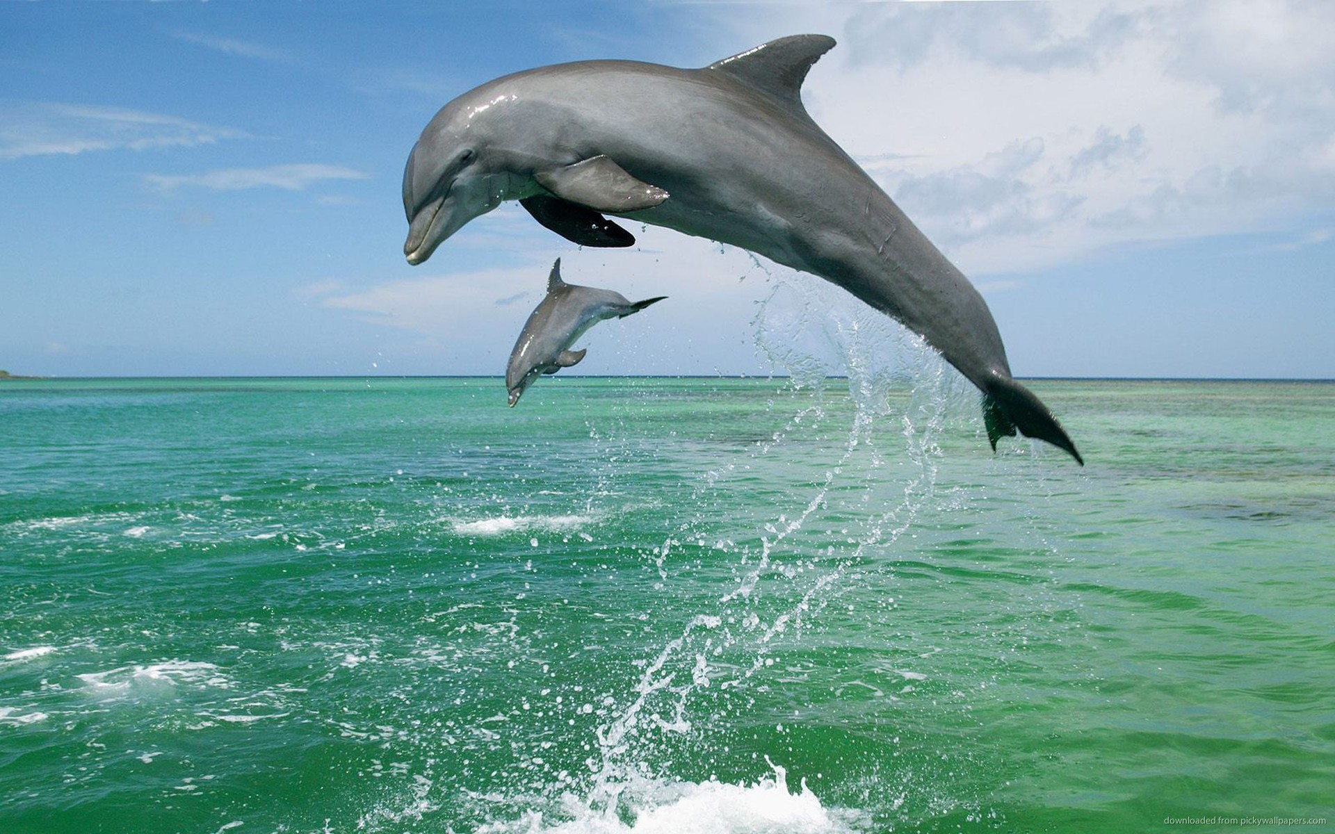 Dolphins Jumping HD Wallpaper Download HD Wallpapers 1920x1200