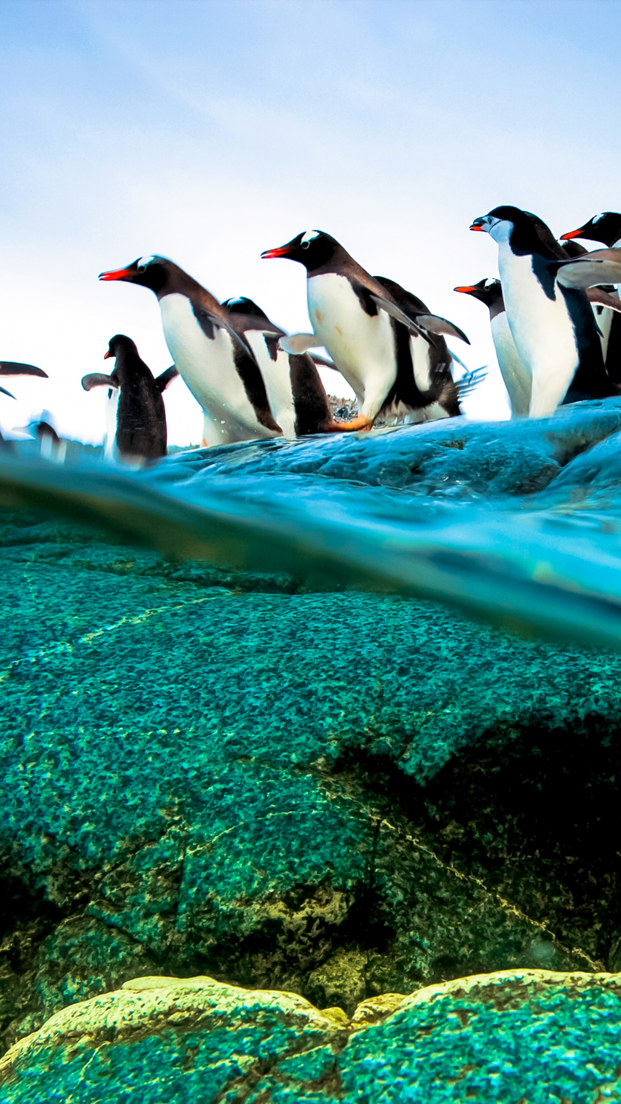 Diving Penguins Wallpaper for iPhone X 8 7 6   Download on 1242x2208