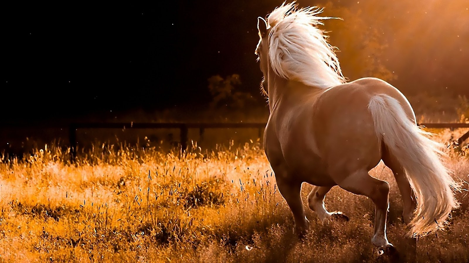 All Wallpapers Beautiful Horse Hd Wallpapers 2013 1600x900
