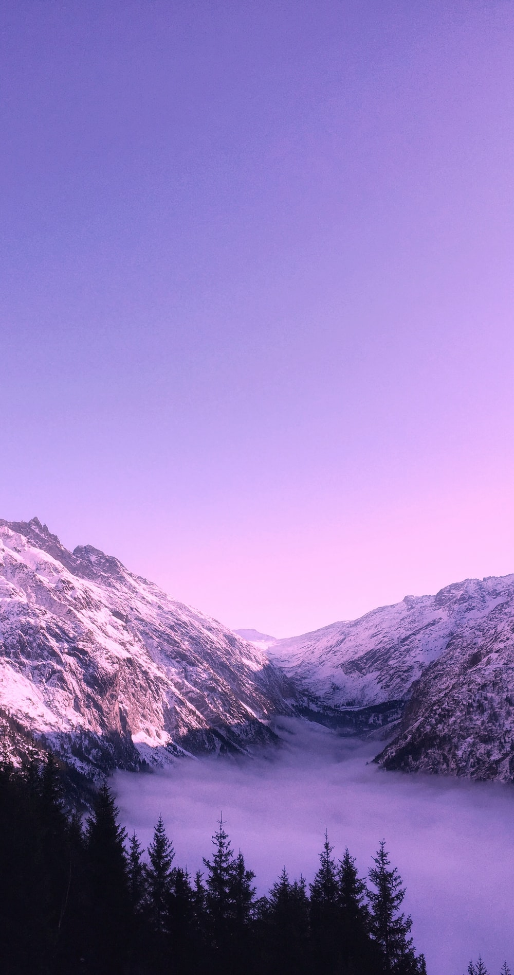 Purple Wallpapers HD Download [500 HQ] Unsplash 1000x1895