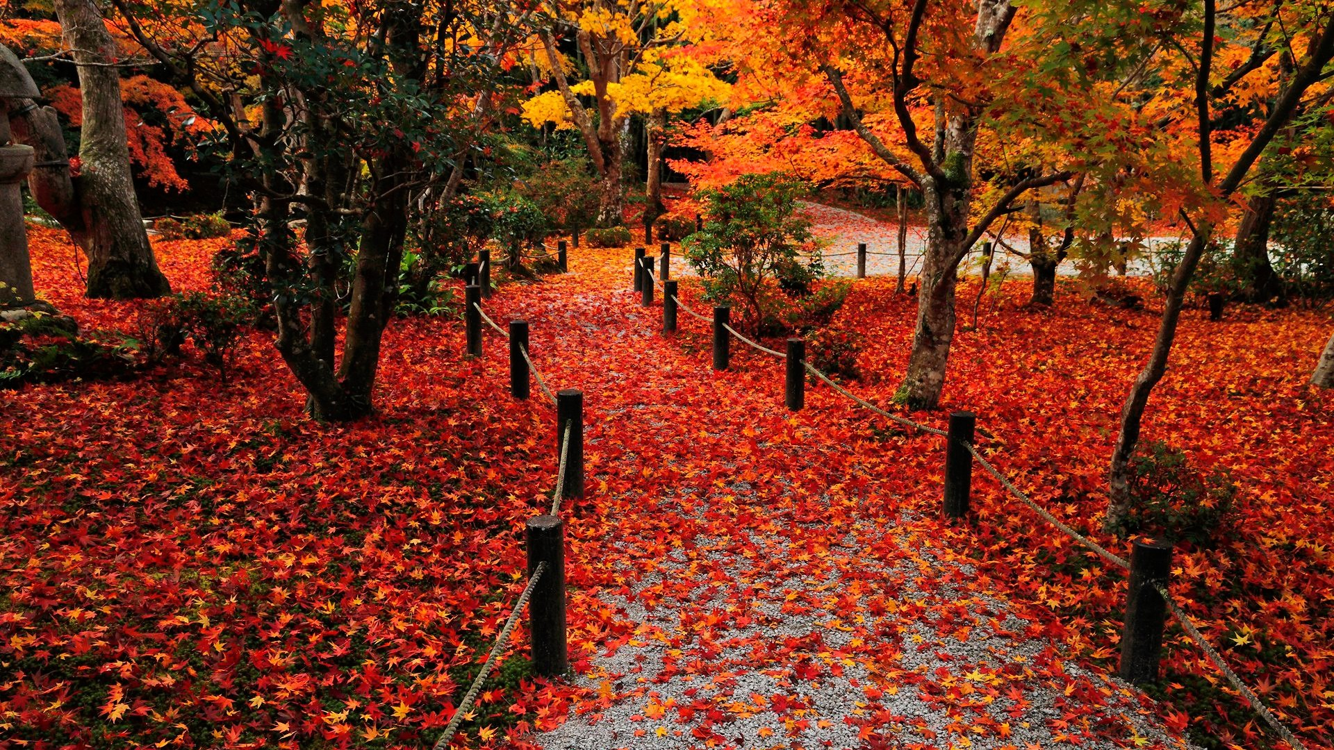 Autumn Leaves   Wallpapers 1920x1080