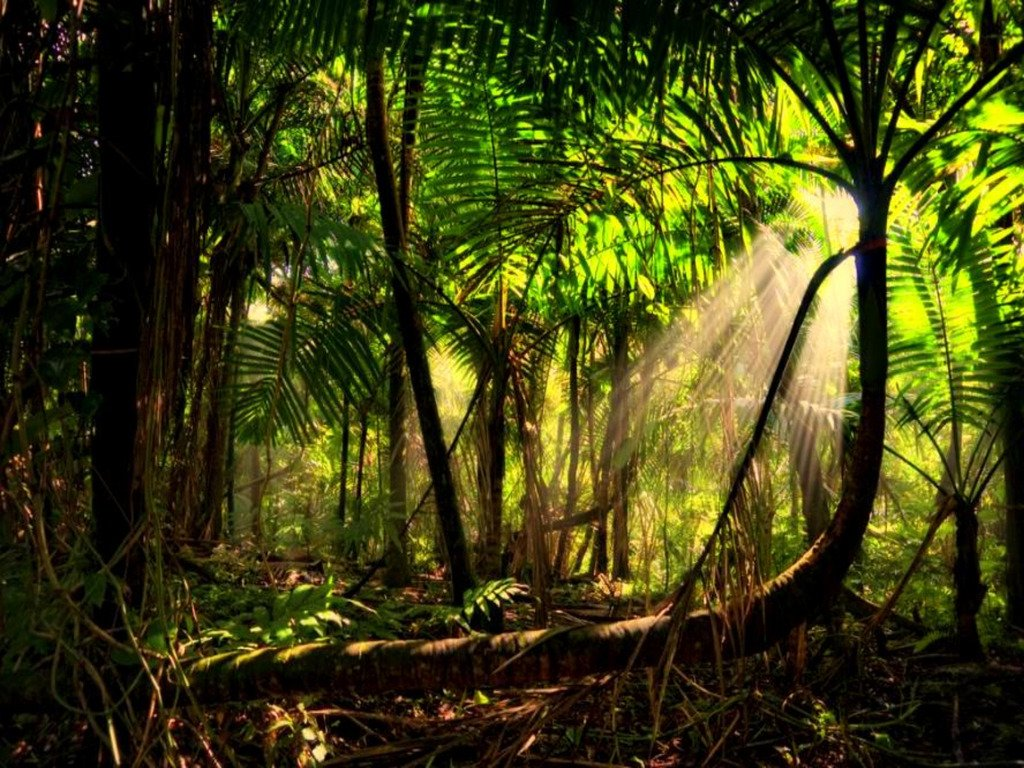Rain forest background wallpapersafari for Forest floor definition