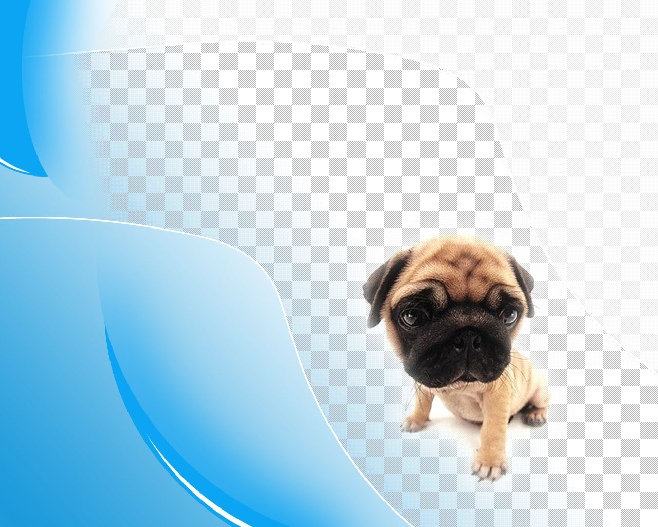 Pug Wallpaper Dogs Black Beautiful Pictures HD Wallpapers Pug 1280x1024