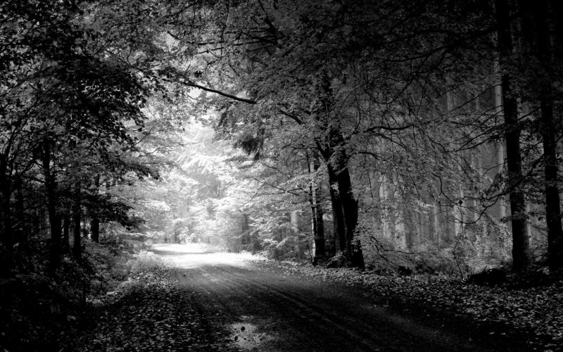 forest background black and white hd wallpapers Car Pictures 800x500