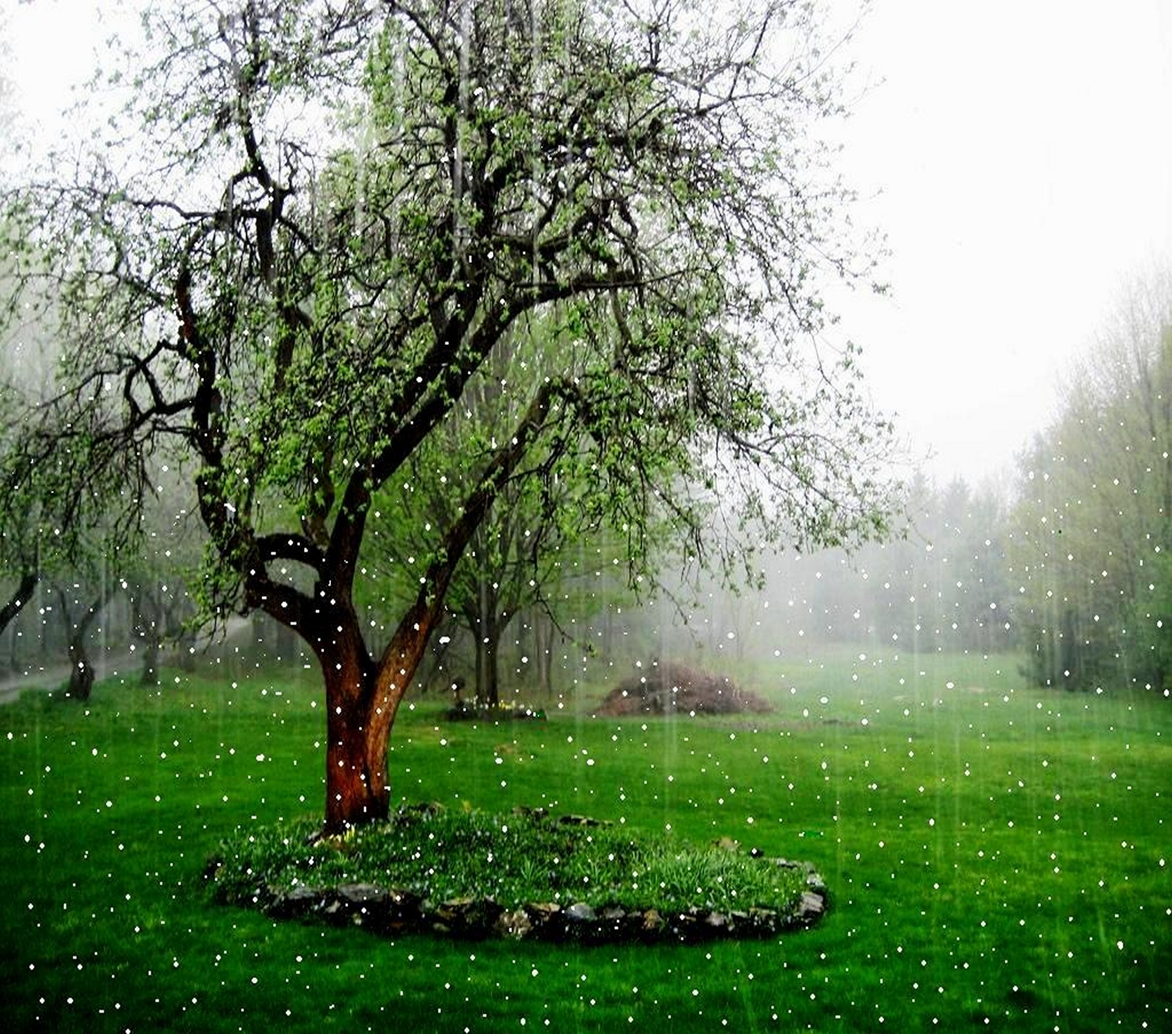 Beautiful Rain Wallpaper Wallpapersafari