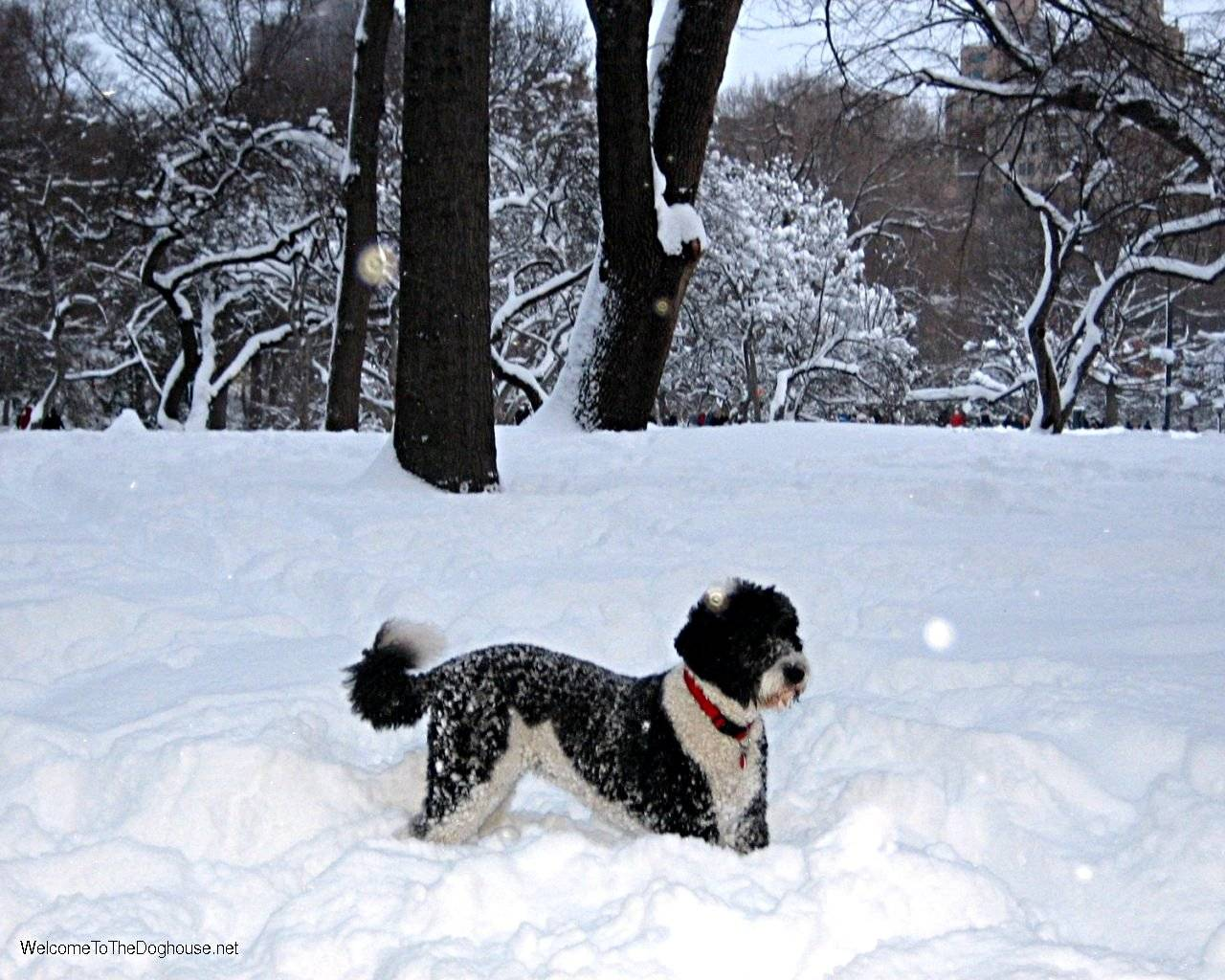 Playing in snow   Dogs Wallpaper 1280x1024