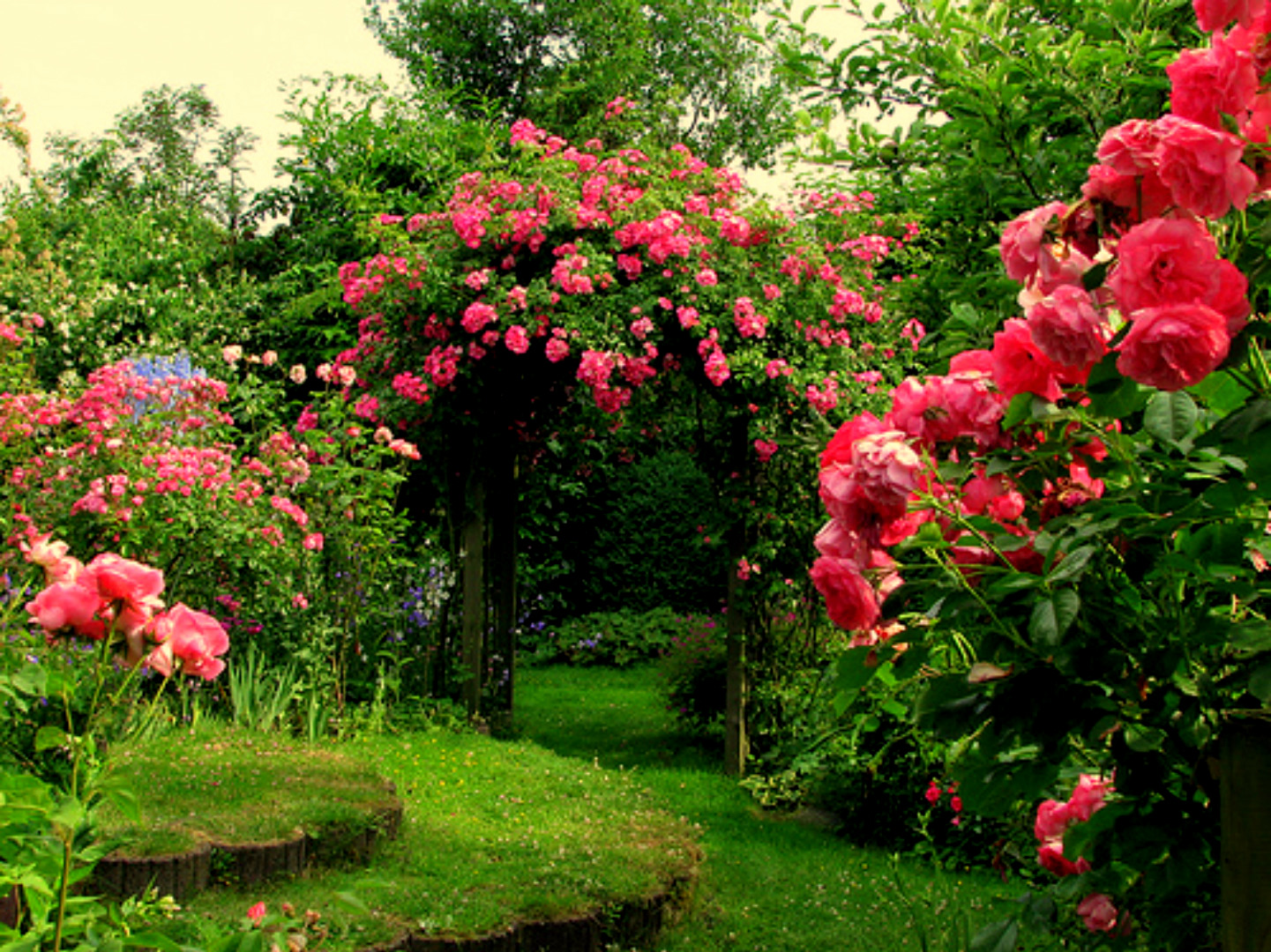 Garden Flowers Wallpaper rose flower background - wallpapersafari