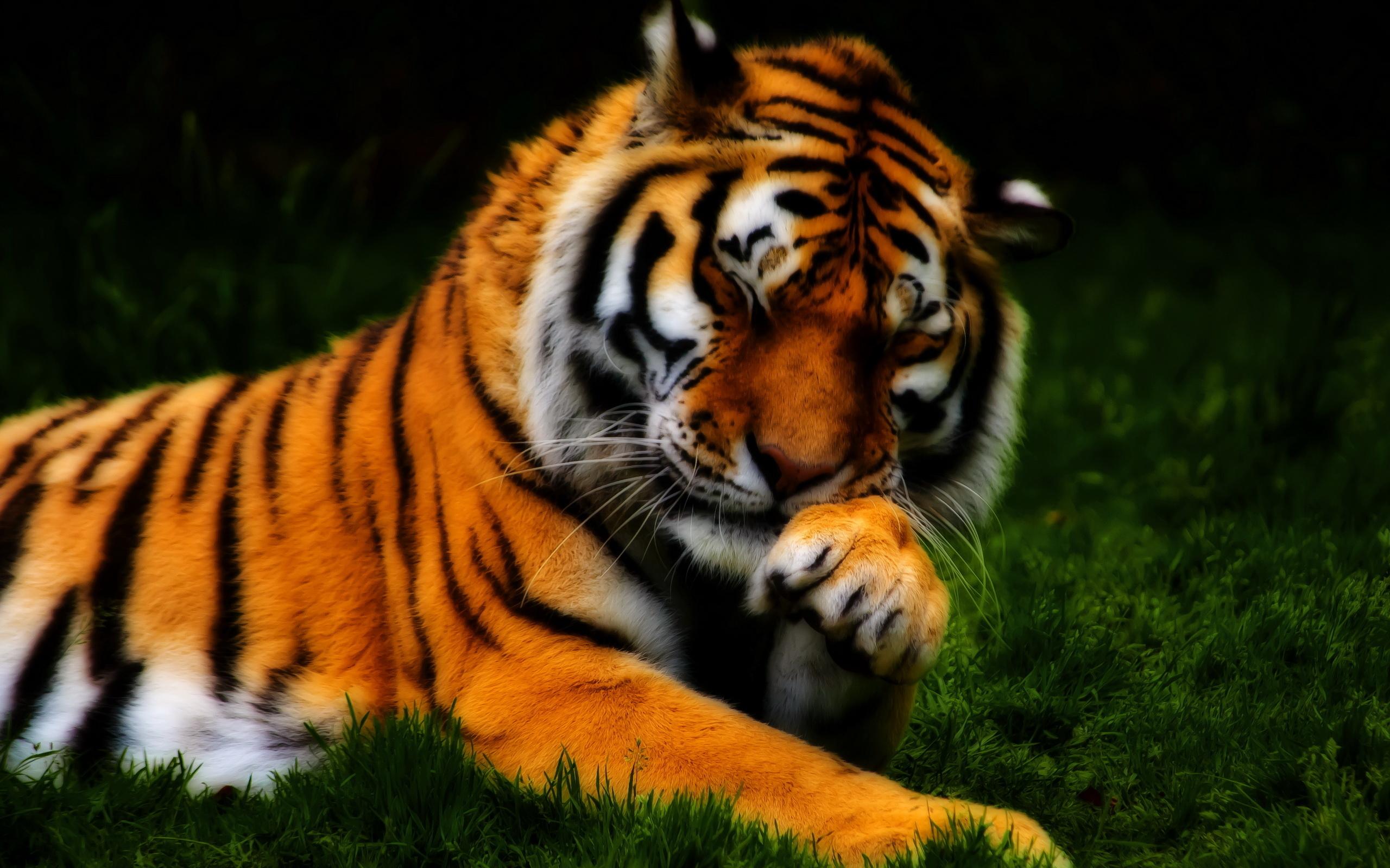 Cool Tiger Wallpapers - WallpaperSafari