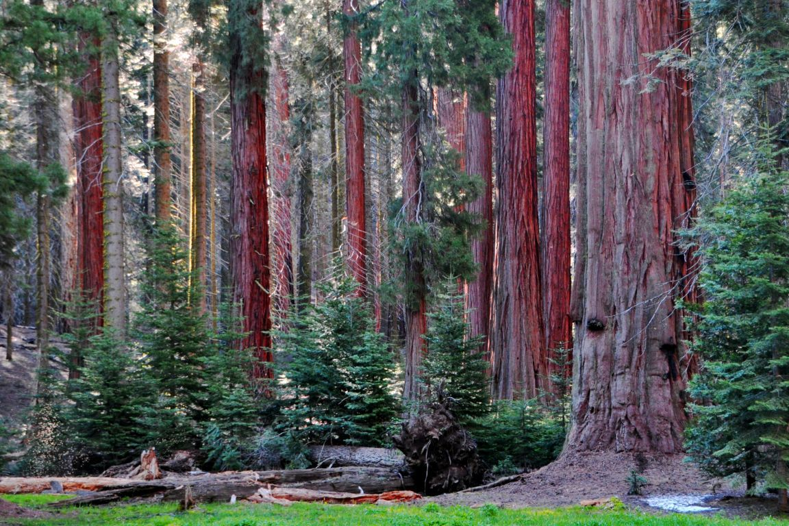 Sequoia National Park Images   HD Wallpapers Backgrounds of Your 1152x768