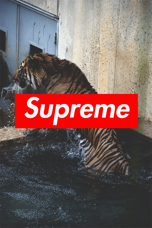 supreme iphone wallpaper Tumblr 500x750