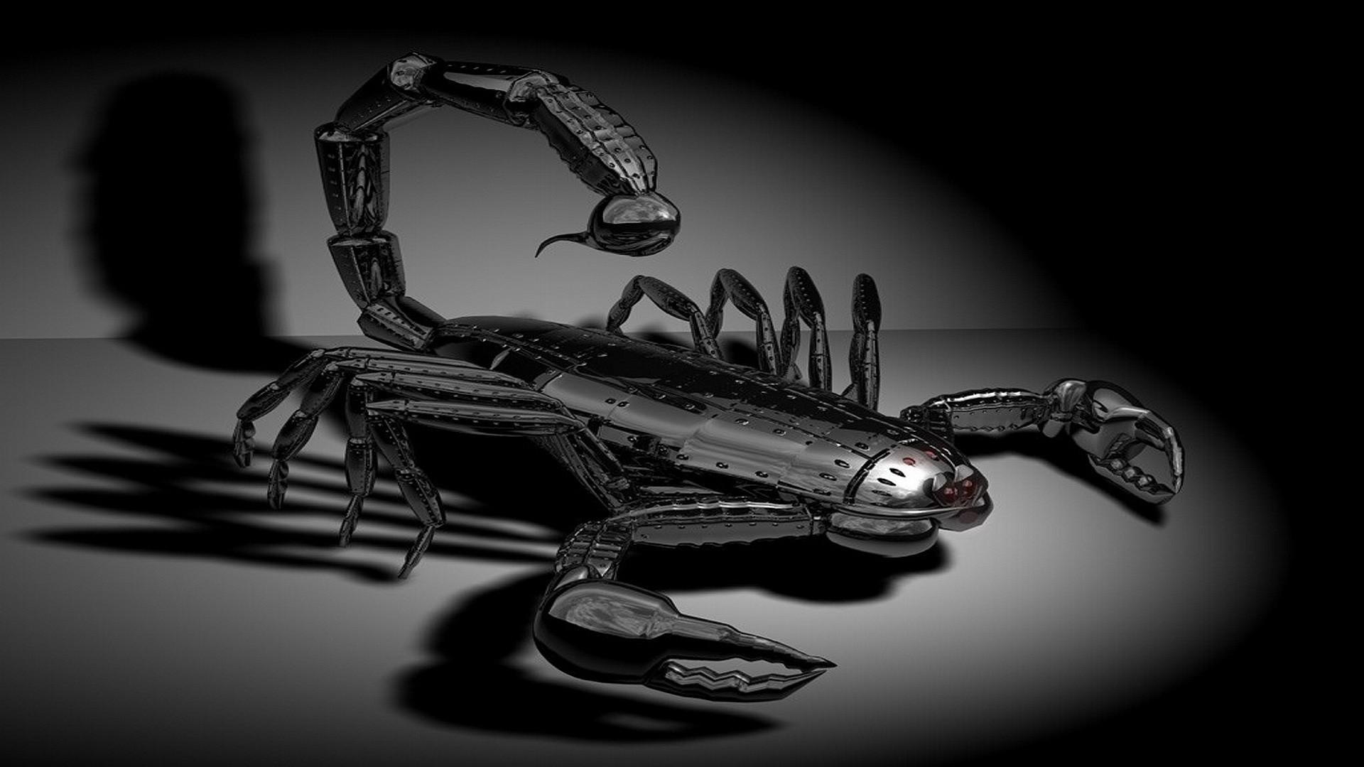 com mediawallpapers 1920x108012meal scorpion 12114jpg 1920x1080
