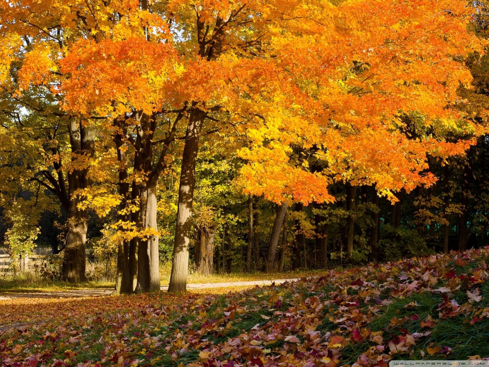 40 Autumn Scene Background Wallpaper for Desktop 1600x1200