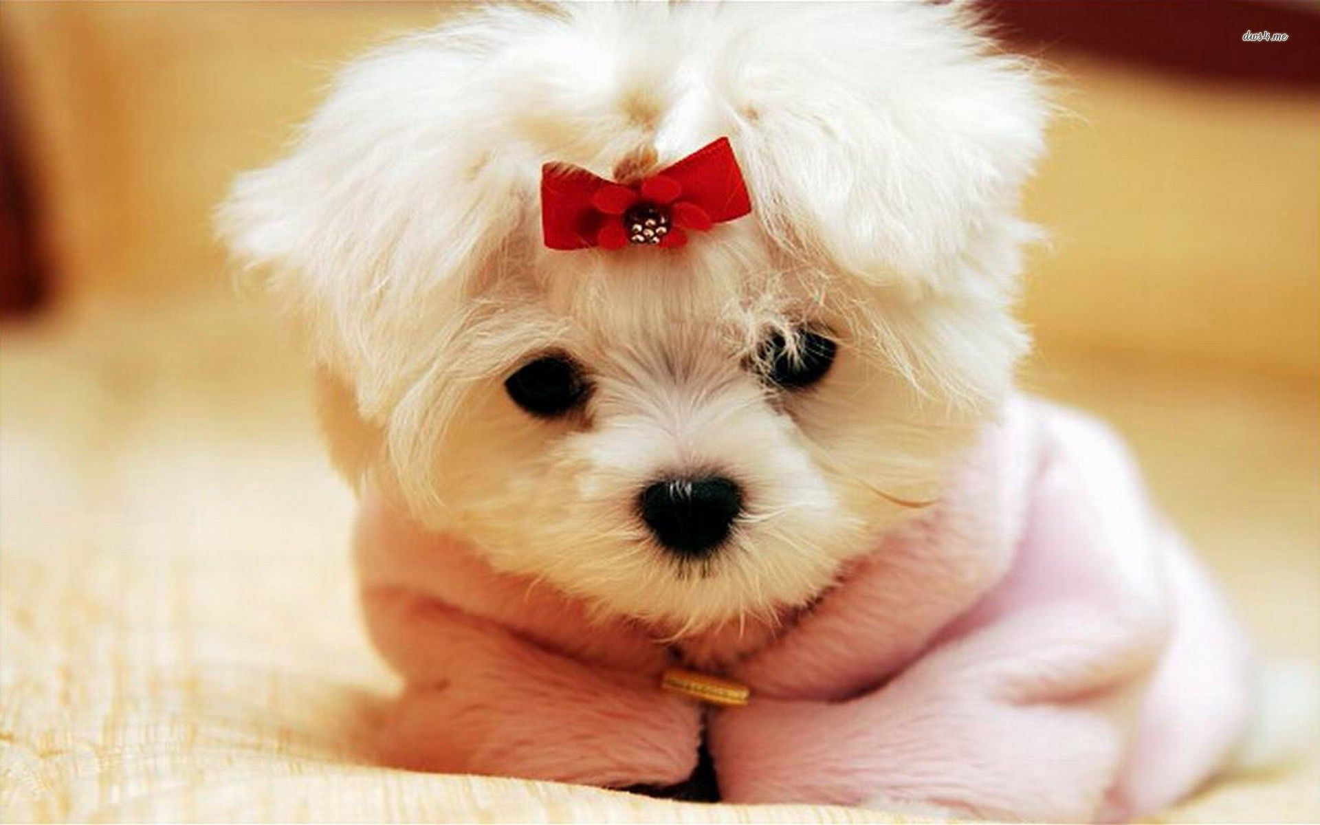 Cute Puppies 4 390189 High Definition Wallpapers wallalay 1920x1200