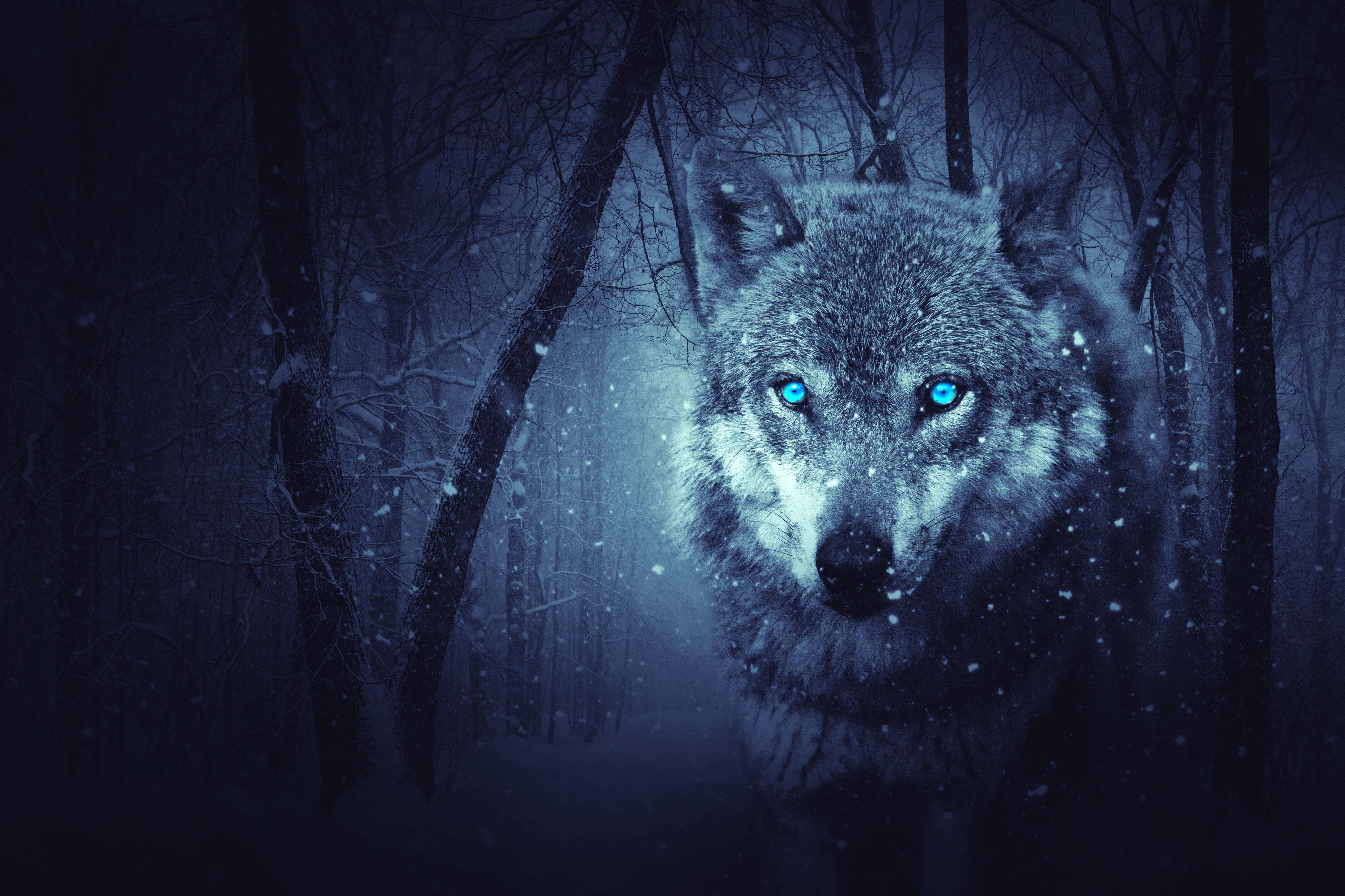 Fantasy Wolf Wallpaper 12   5616 X 3744 stmednet 5616x3744