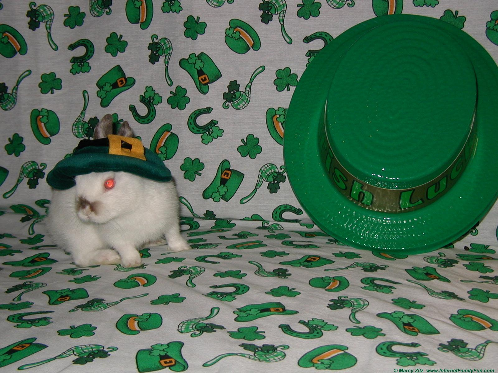 Patricks Day   Domestic Short haired Cat Download Wallpapers on 1600x1200