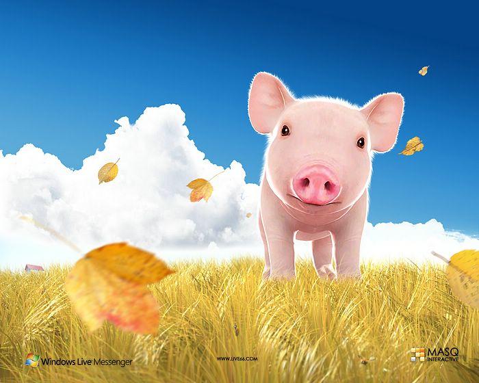 Baby pigs wallpapers wallpapersafari - Pig wallpaper cartoon pig ...