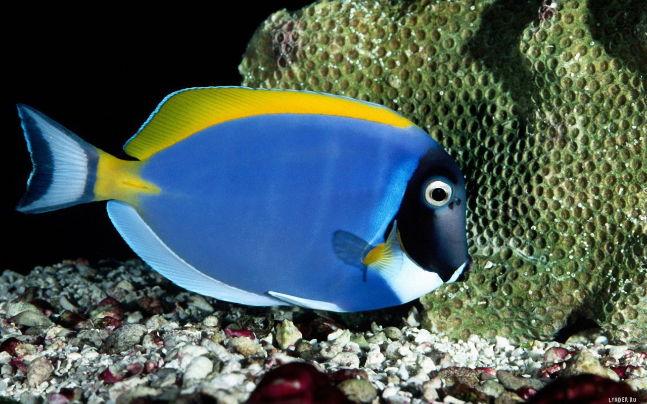 Blue Cool Fish Wallpapers   7997 1280x800