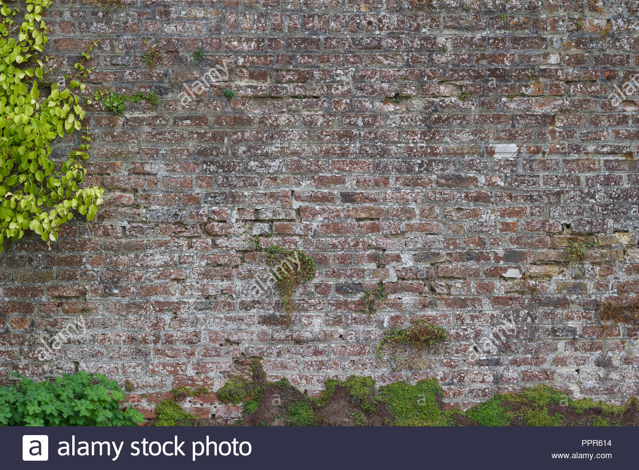 Brick wall background featuring a centuries old grey color brick 1300x956
