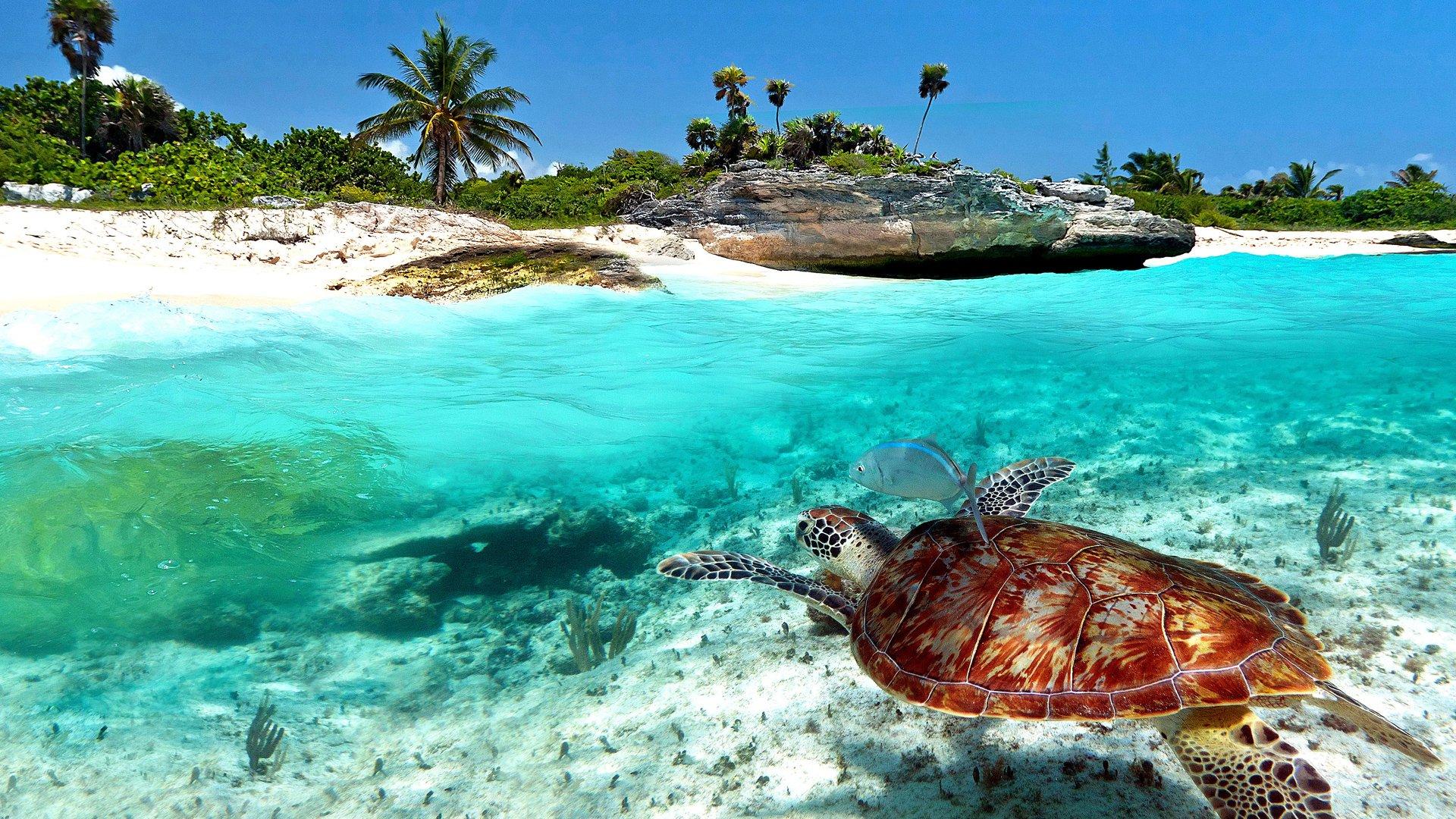 Playa Del Carmen Hotels All Inclusive Deals