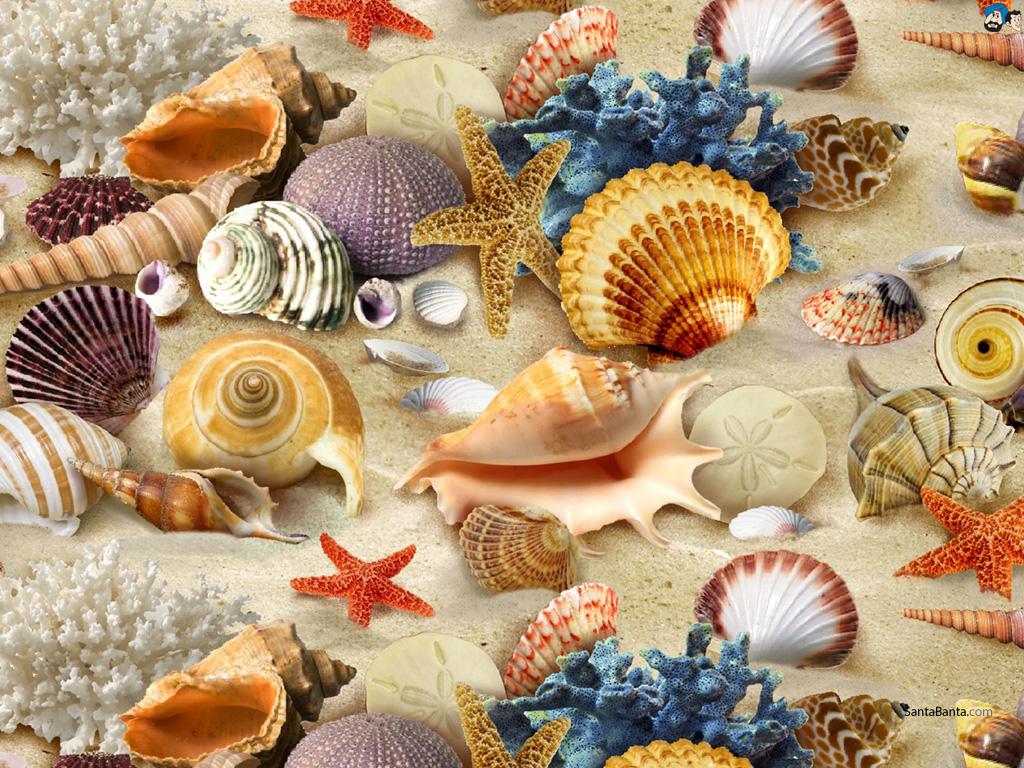 seashells wallpaper collection - photo #22