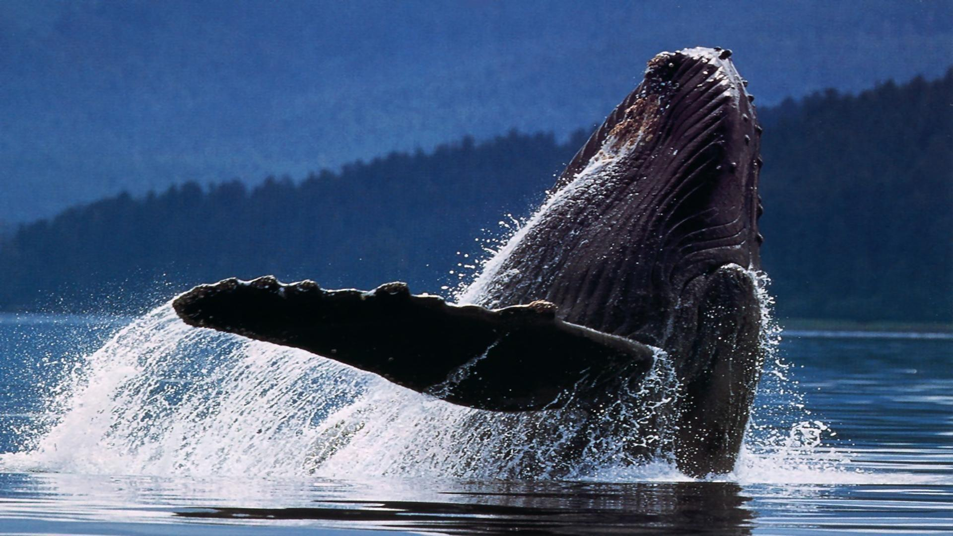 Free Whale Wallpapers For Desktop