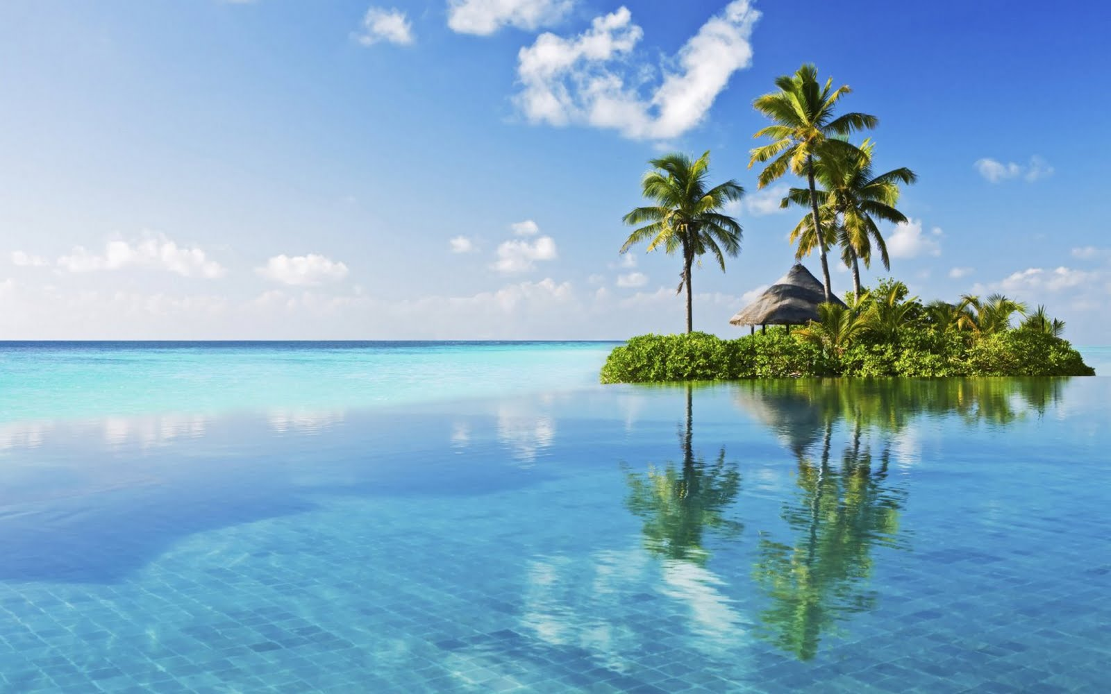 Palm Tree Beach Wallpaper image gallery 1600x1000