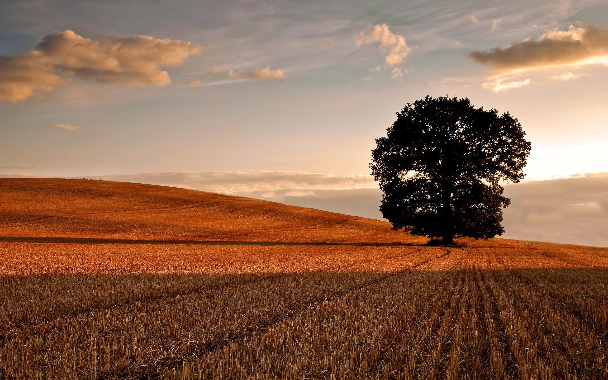 Oak Tree Wallpapers Archives   HDWallSourcecom 2560x1600