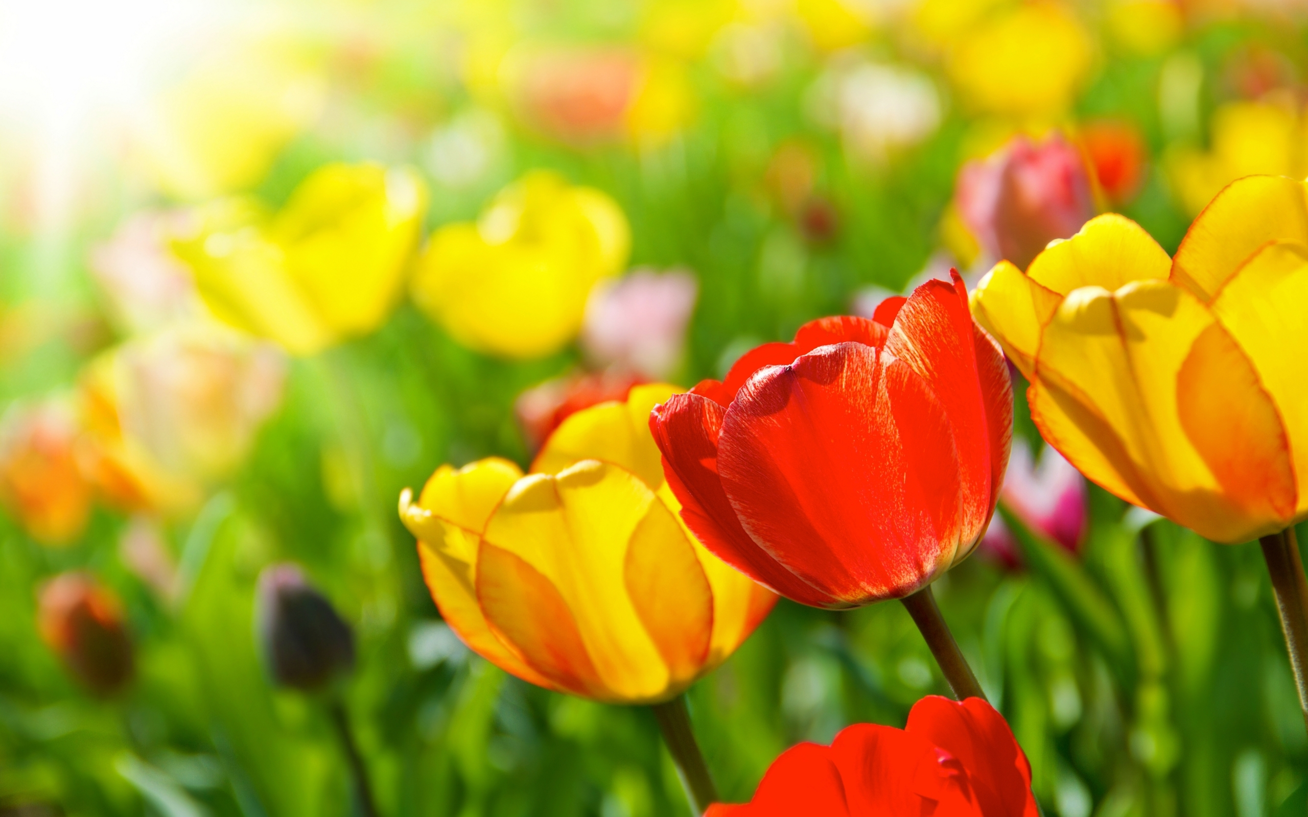 download Bright spring flowers wallpapers and images 2560x1600