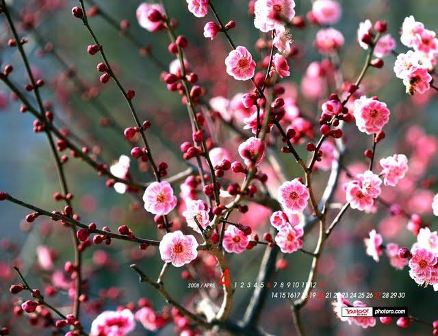 wallpapersApril wallpaper   blossoming Spring wallpapers Wallpaper 640x491