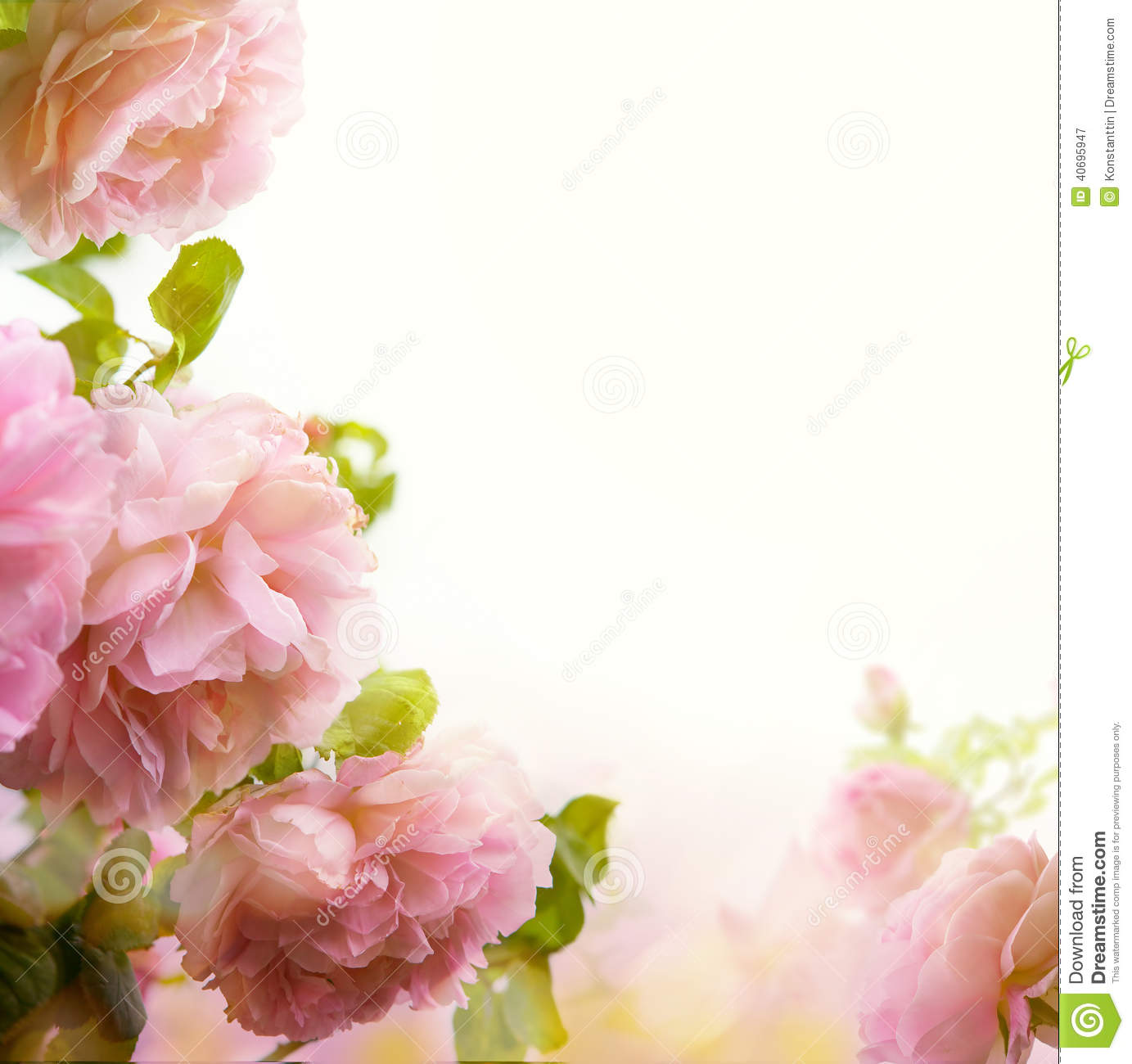 Free Download Image Pink Rose Flower Border Pc Android Iphone And