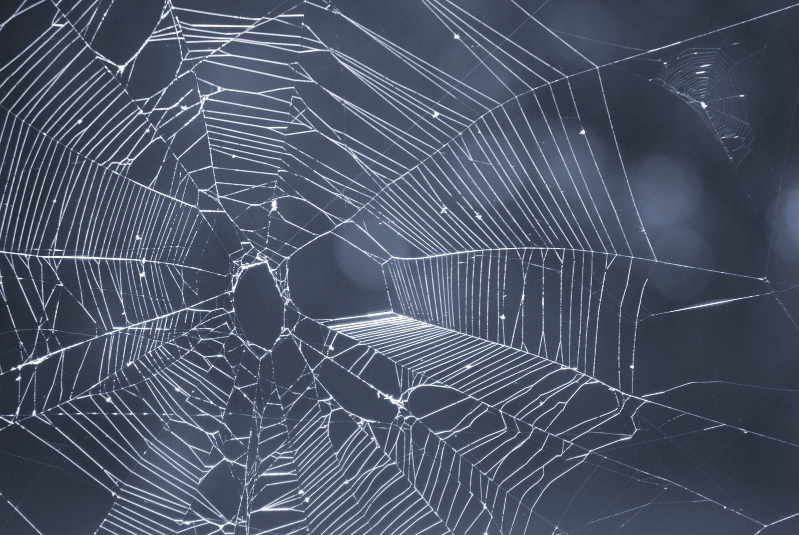 Displaying 12 Images For   Halloween Spider Web Background 1600x1071